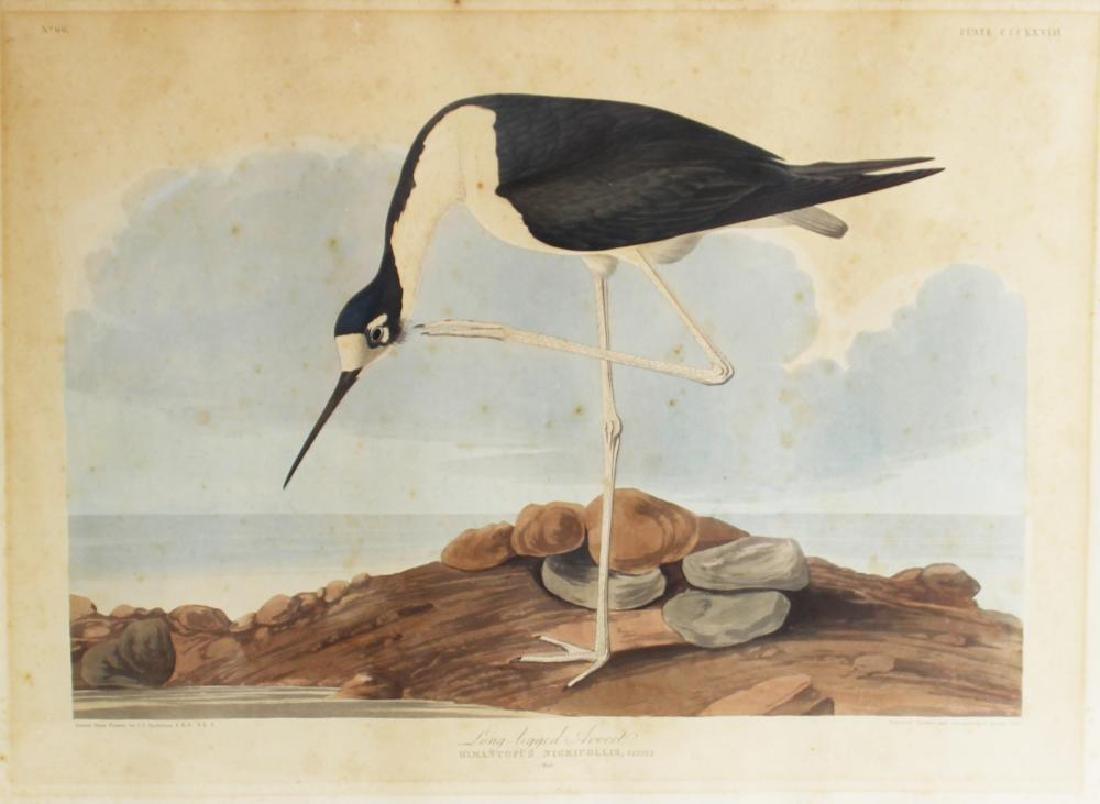 Scarce Original Audubon Havell Edition Plate, The