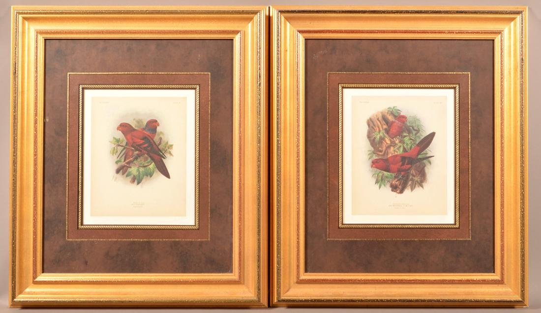 Two Color Lithographs of Lory Parrots.