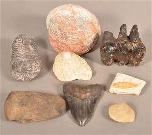 Lot of Prehistoric Fossils.