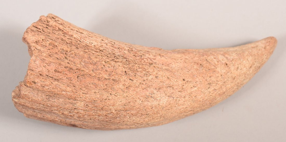 An old interesting weathered bison horn core of bone.
