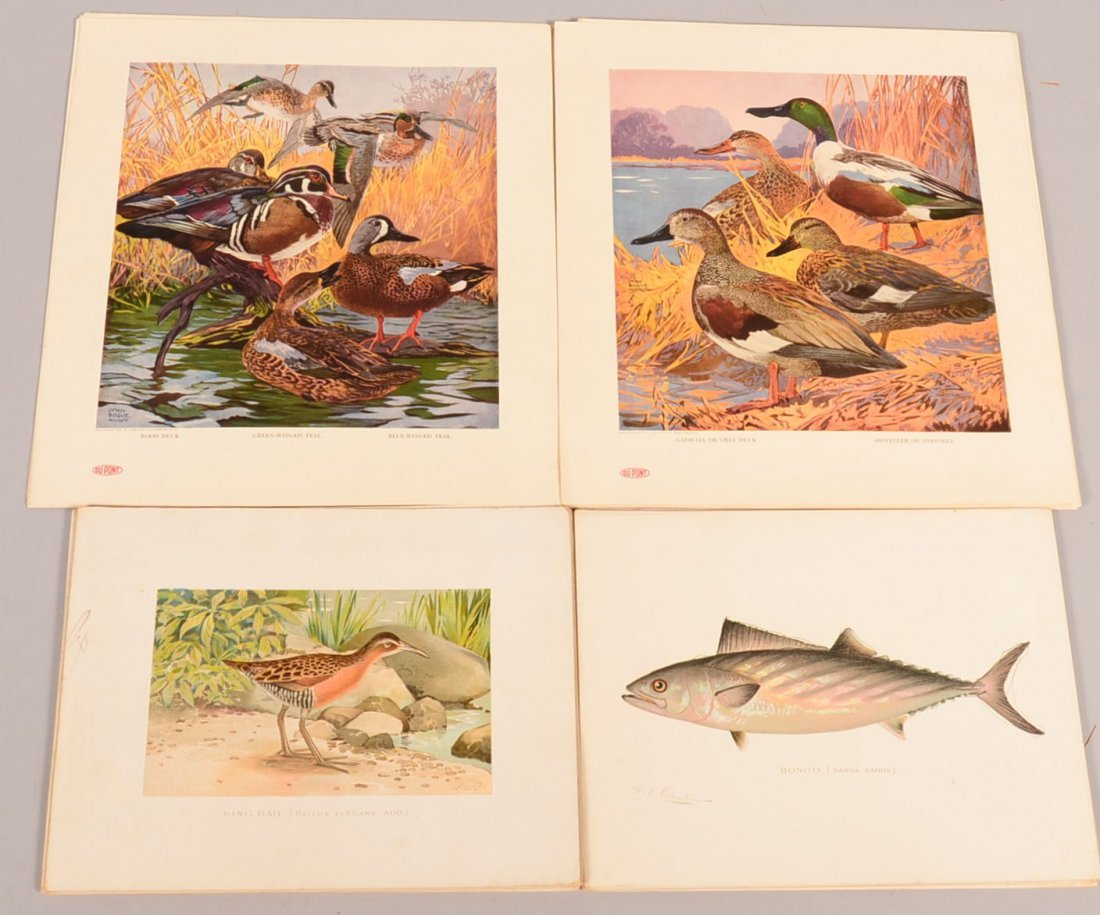 "Lot of bird and fish prints: ""Game Birds and Fishes of"
