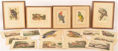 18 Color Lithographs of Birds and Mammals.