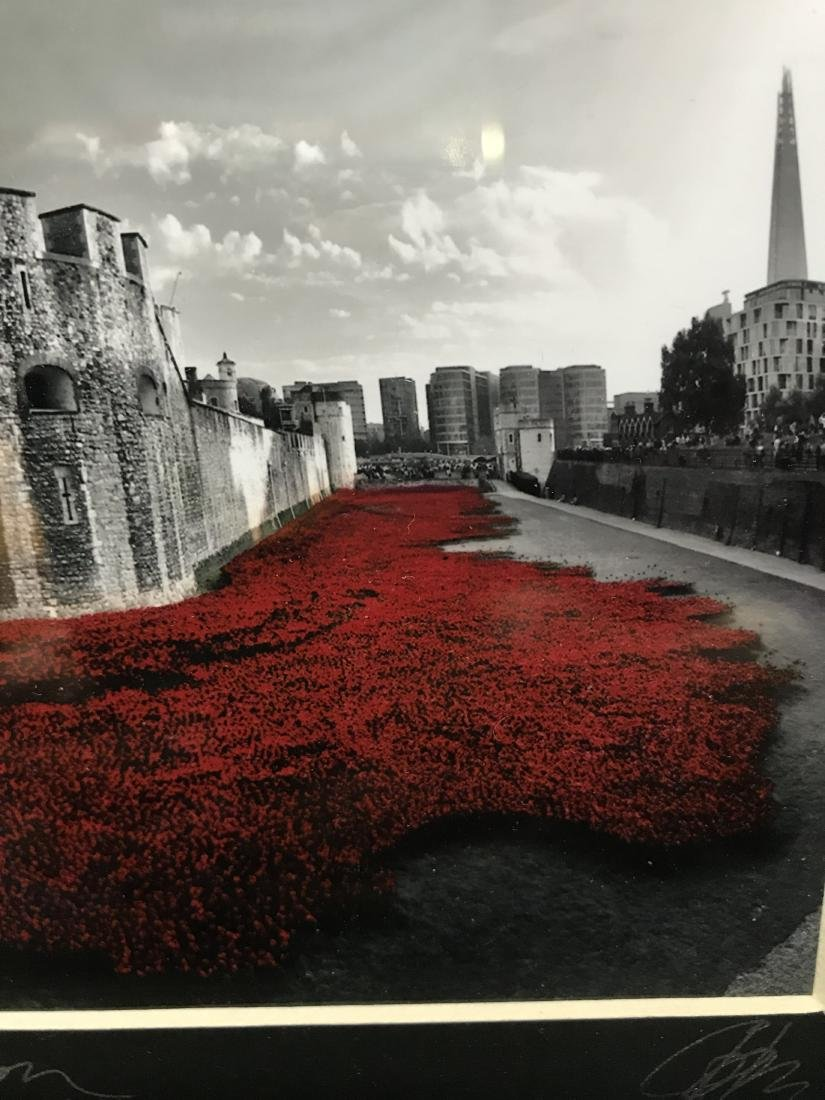 Original Photograph Poppies at Tower of London - 3