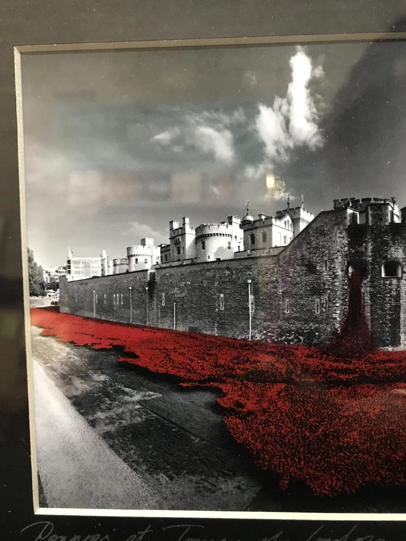 Original Photograph Poppies at Tower of London - 4