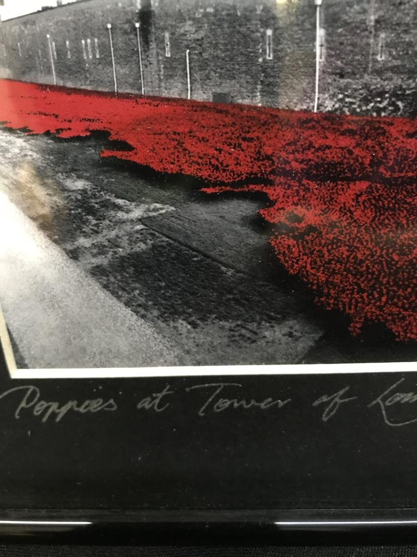 Original Photograph Poppies at Tower of London - 5