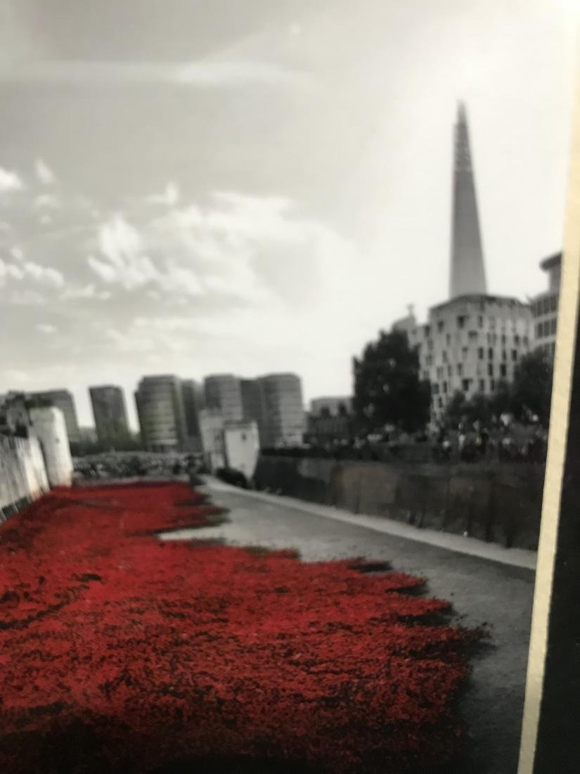Original Photograph Poppies at Tower of London - 8