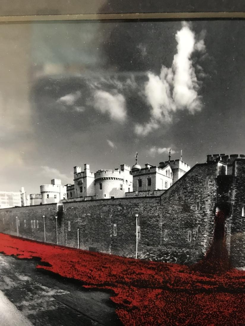 Original Photograph Poppies at Tower of London - 9