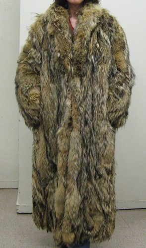 11: A COYOTE NATURAL COLORED FULL LENGTH LADY'S (OR  MA