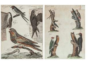 A pair of ornithological hand colored engravings