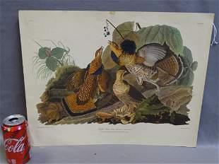 Ruffled Grouse Audubon
