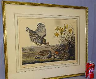 Pinnated Grouse Audubon