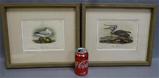 2 Audubons