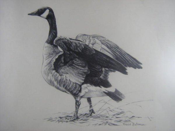 16: Robert Bateman  Canadian Art  Wildlife  Nature  Tor