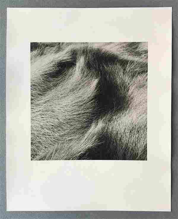 Eric Lindbloom, 'Salt Marsh Grasses #64, Wellfleet, MA'