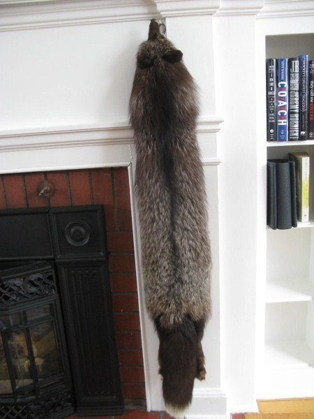 STUNNING SILVER FOX FULL PELT WITH CLIPS