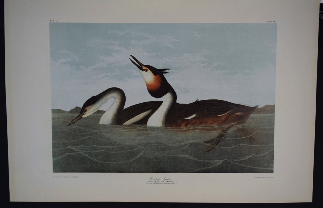 John James Audubon - Crested Grebe
