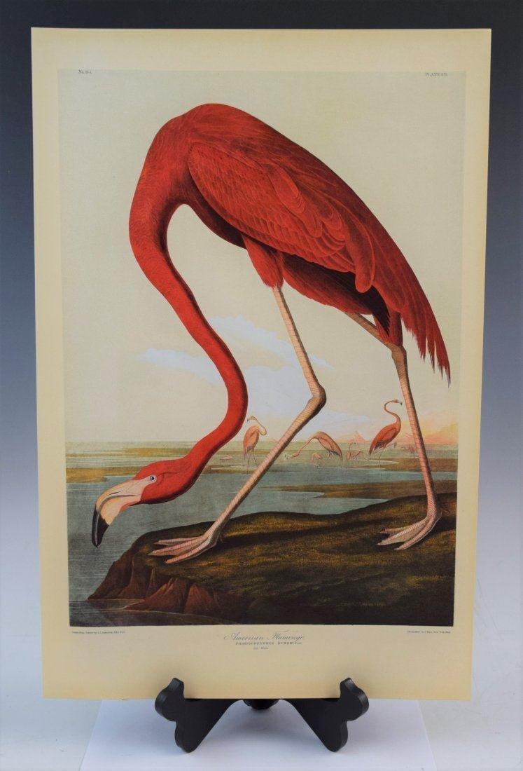 John James Audubon - American Flamingo (Chromolitho)