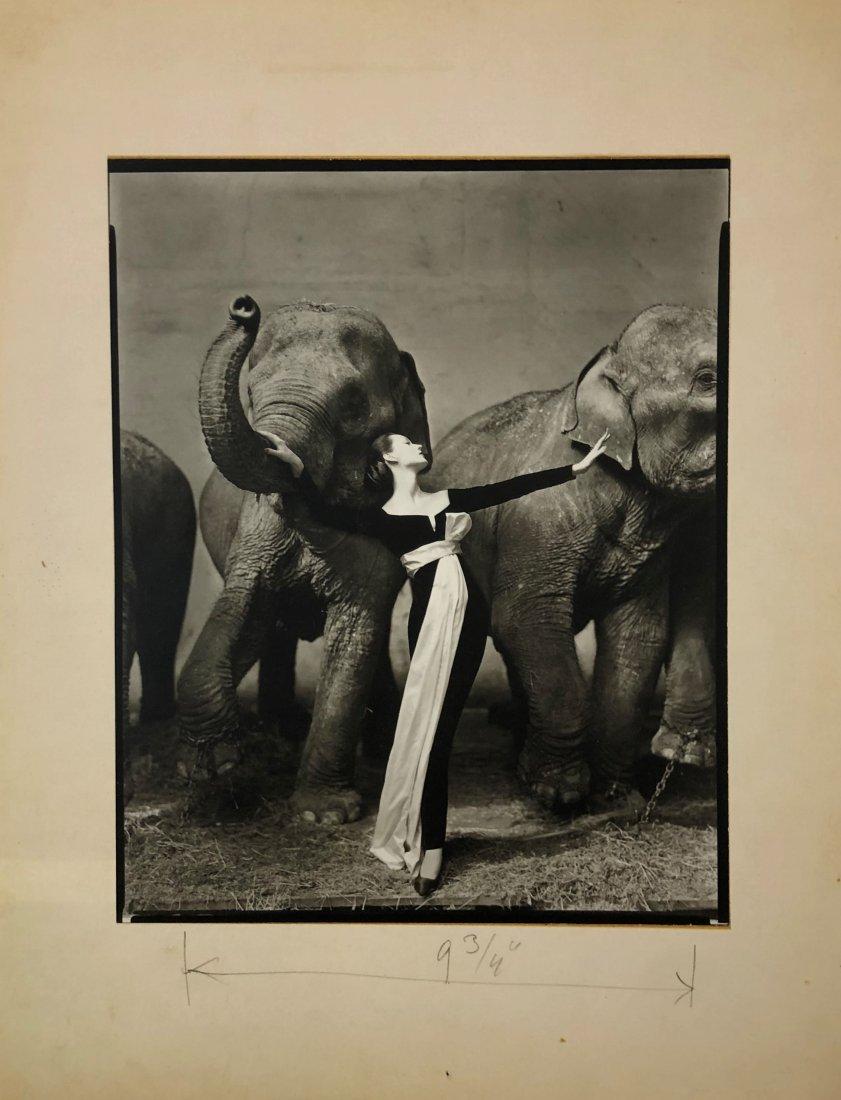 Richard Avedon -  Dovima with Elephants, Paris 1955
