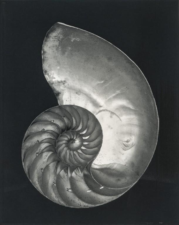 Edward Weston - Nautilus, 1927