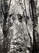 Ansel Adams - Poplars, California c.1937