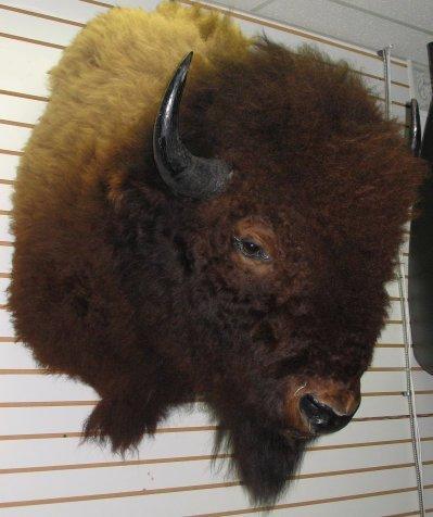 229: Large American Buffalo/Bison Head Mount Taxidermy