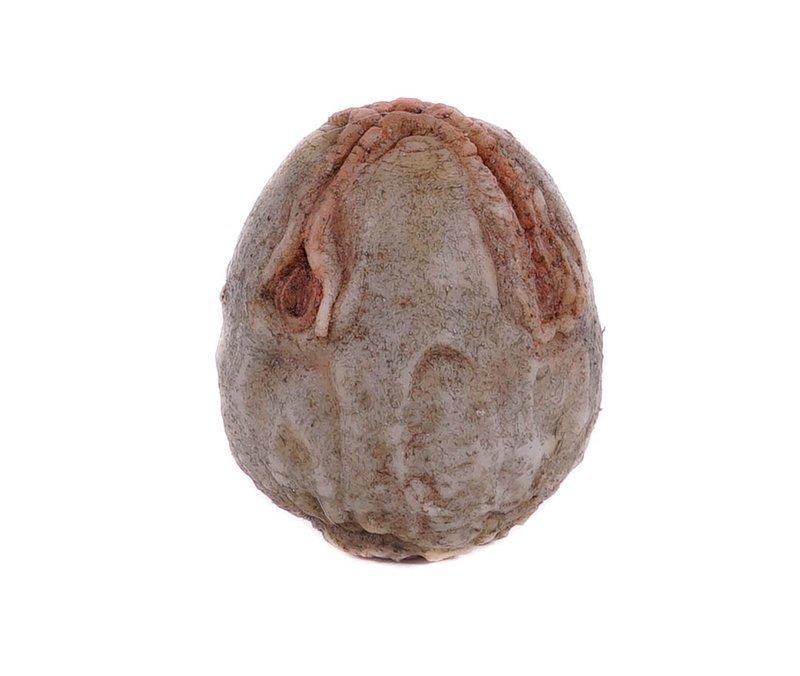 Alien: Covenant Small Alien Egg