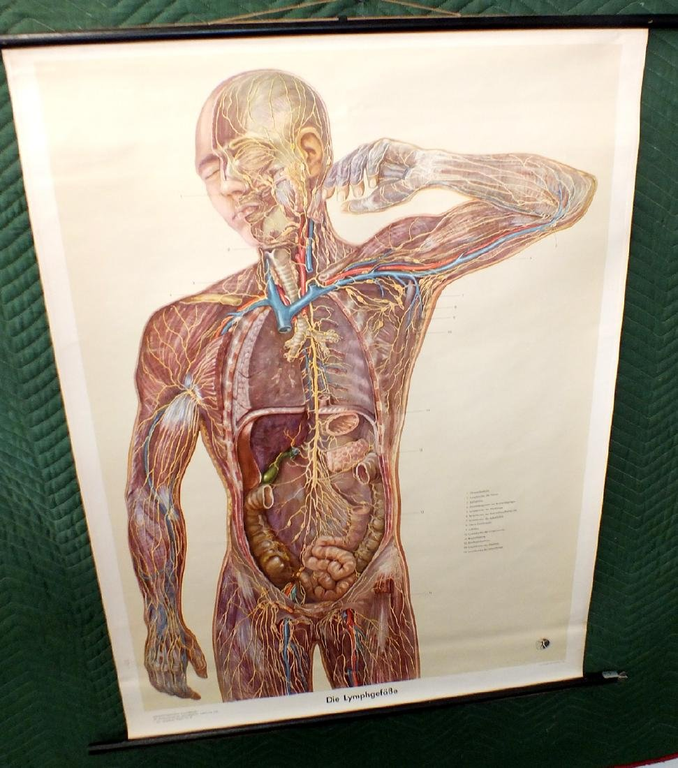 German medical lymphnode diagram