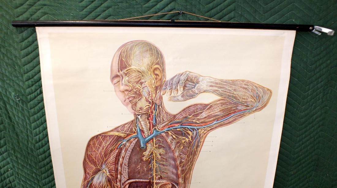 German medical lymphnode diagram - 2