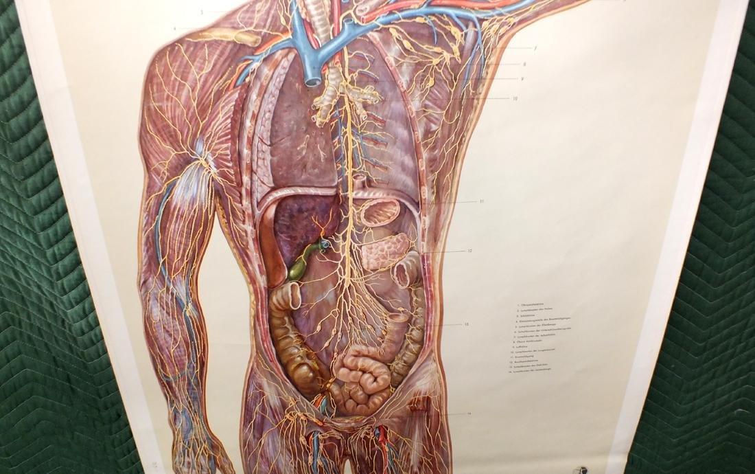 German medical lymphnode diagram - 3