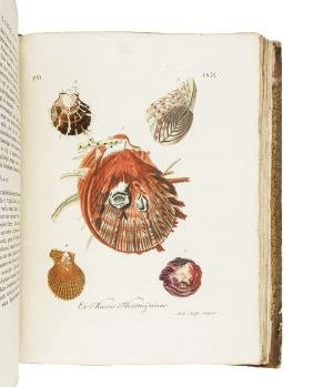 Knorr's Conchology with 190 hand-colored plates