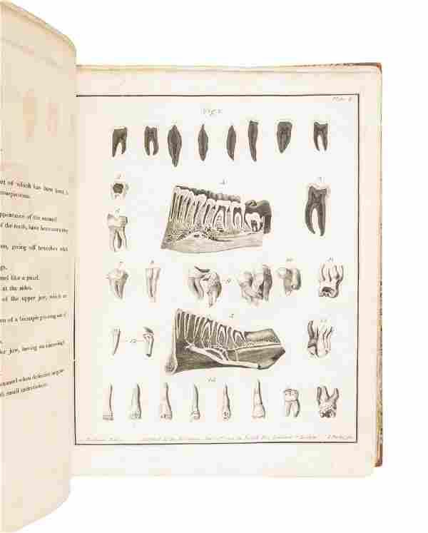 Joseph Fox on Diseases of the Human Teeth