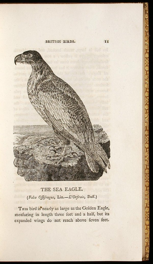 12: History of British Birds, the Figures Engraved on W