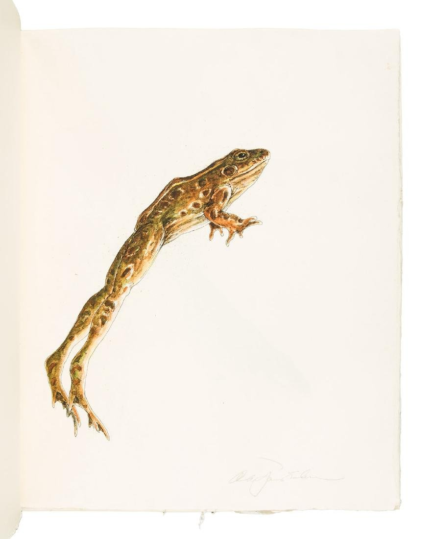 Frogs: 19 unique watercolors by  Alan James Robinson - 5