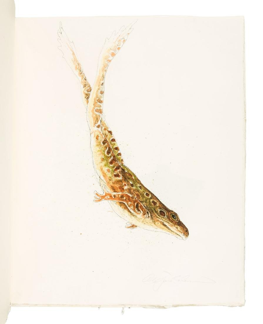 Frogs: 19 unique watercolors by  Alan James Robinson - 8