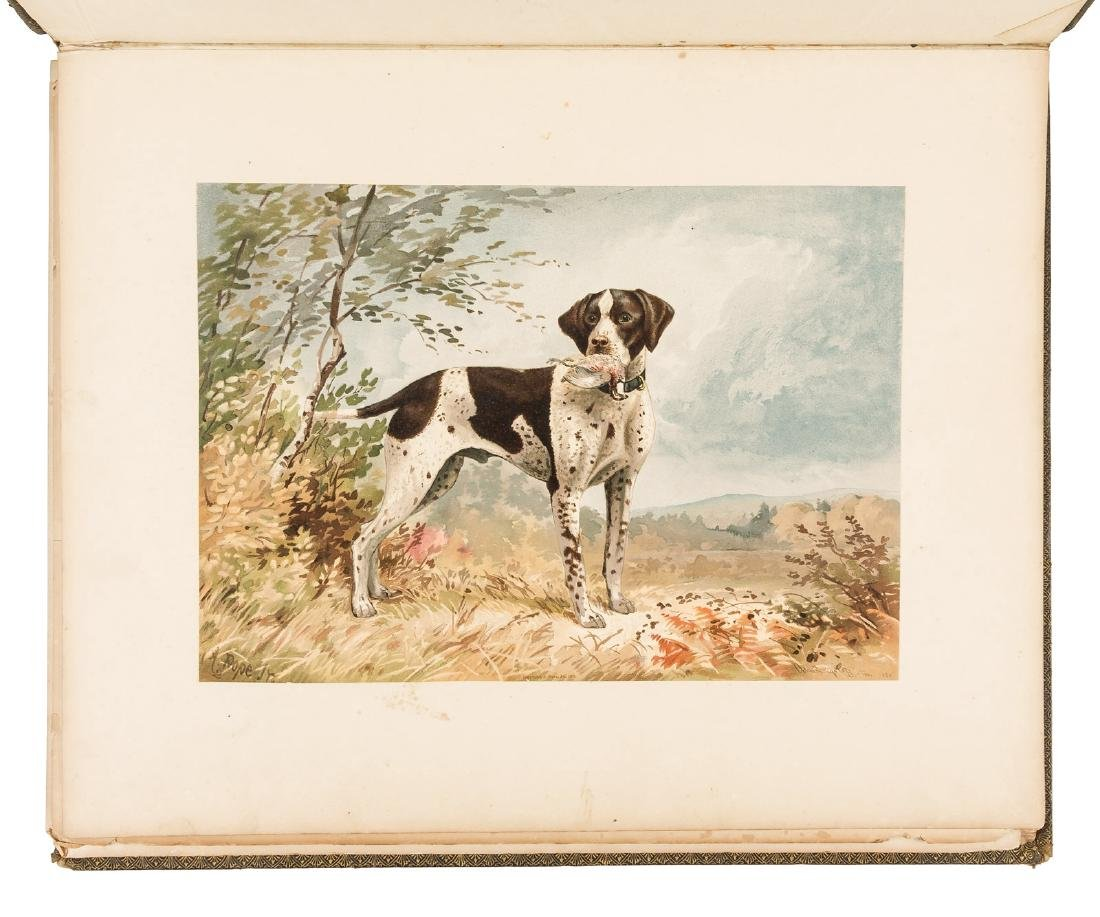 Chromolithographs of American dogs, 1879