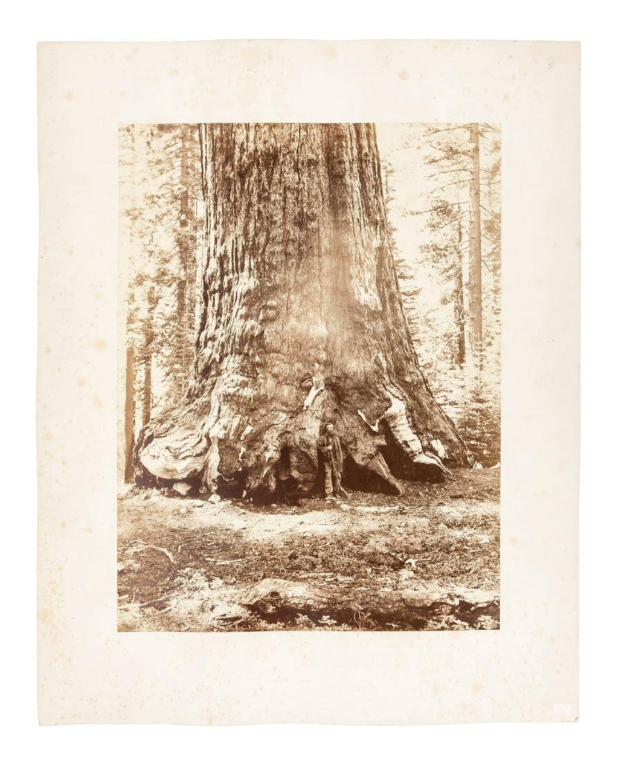 C.E. Watkins mammoth plate of Grizzly Giant, Mariposa