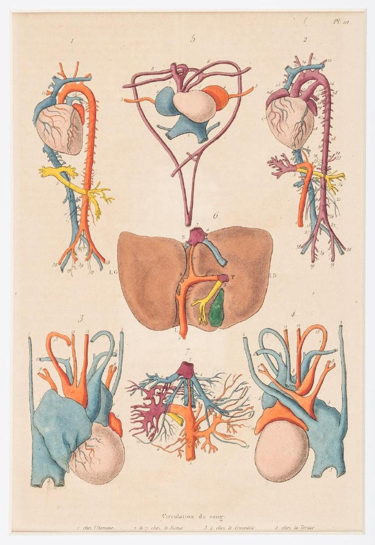 25 Hand-colored Plates form Gerin's Dictionnaire