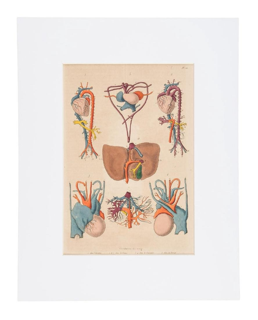 25 Hand-colored Plates form Gerin's Dictionnaire - 3
