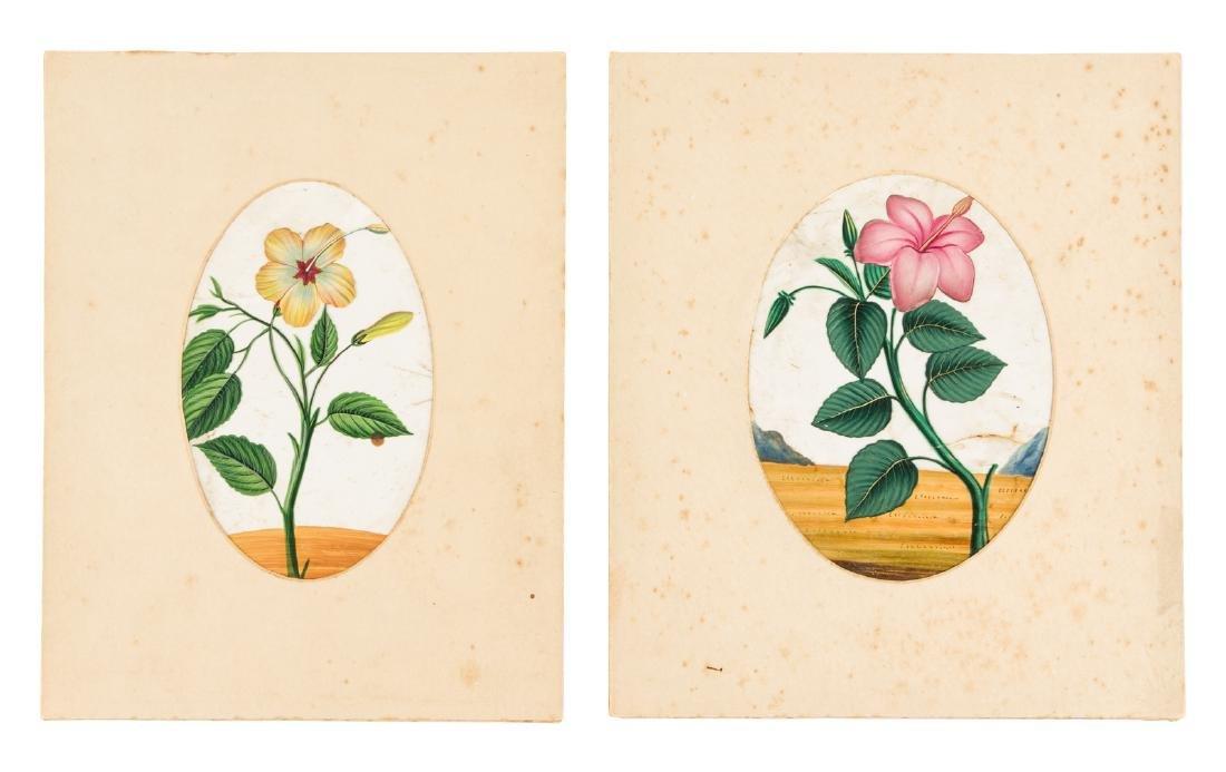 Original 19th century botanical illustrations