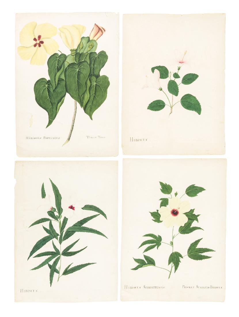 Original 19th century botanical illustrations - 2