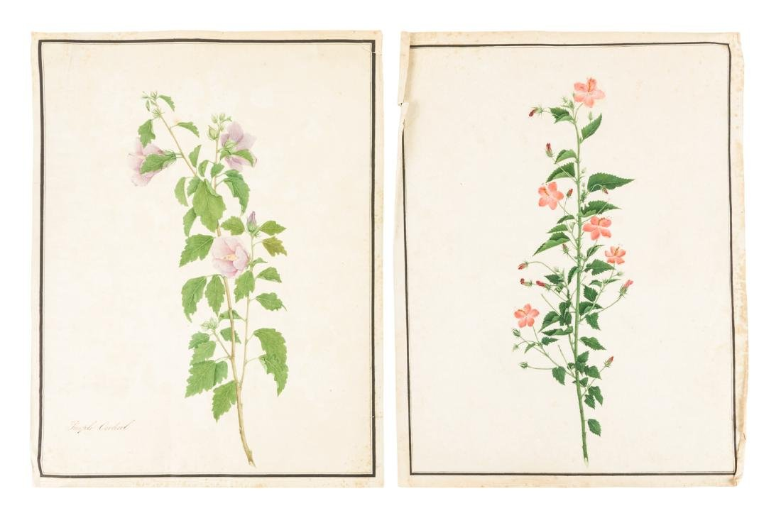Original 19th century botanical illustrations - 3