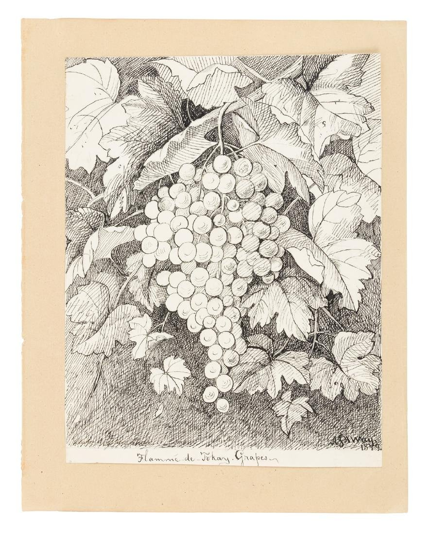 Original Pen and ink drawing of grapes by A. J. H. Way