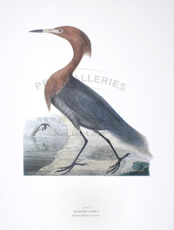 Arion Press Birds of the Pacific Slope