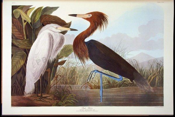 1007: Ariel Press Birds of America One of 250 copies