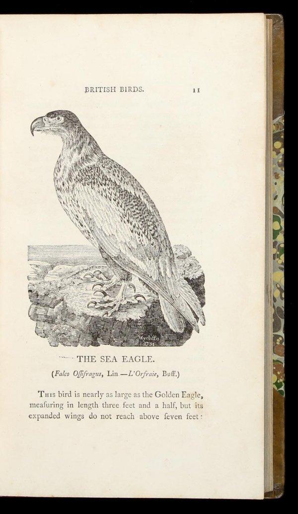 1012: Thomas Bewick's British Birds
