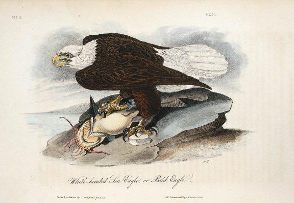 1009: Volume 1 of Audubon's Birds 1840 Octavo Edn.