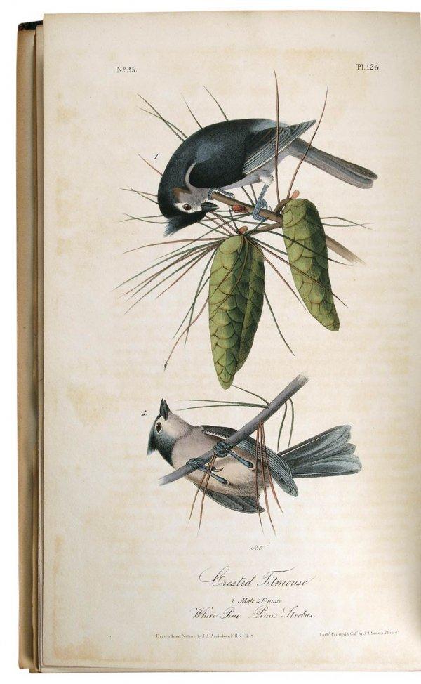 1010: Volume 2 of Audubon's Birds 1841 Octavo Edn.