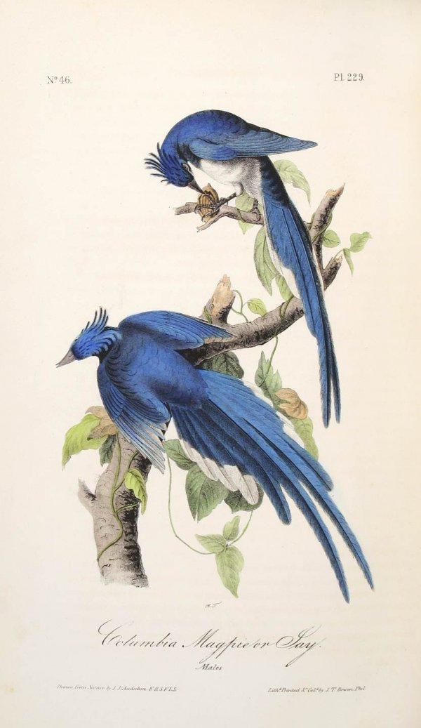 2276: Volume 4 of Audubon's Birds 1842 Octavo Edn.