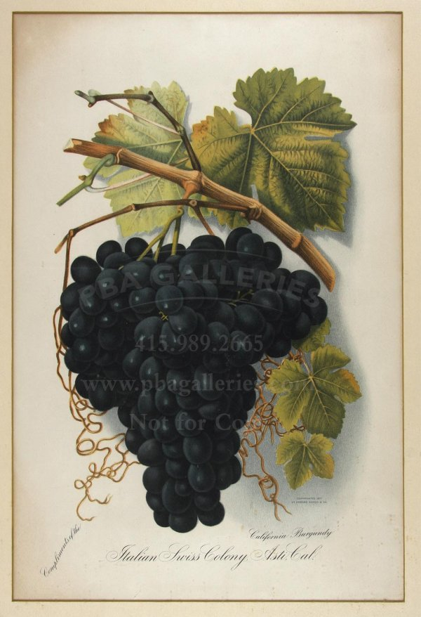 1021: Rare 1876 California Grape Lithograph