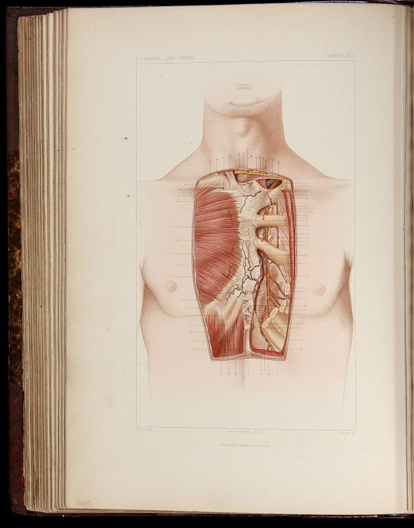 2020: B.J. Beraud Atlas Complet d'Anatomie